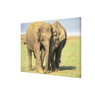 India, Nagarhole National Park. Asian elephant Stretched Canvas Prints