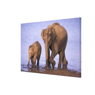 India, Nagarhole National Park. Asian elephant Stretched Canvas Print