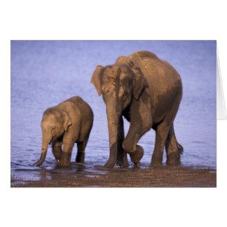 India, Nagarhole National Park. Asian elephant Greeting Card