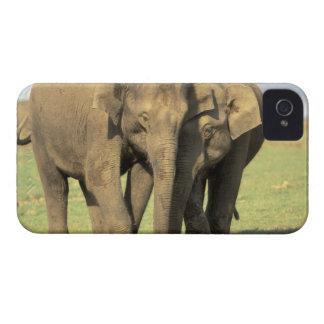 India, Nagarhole National Park. Asian elephant iPhone 4 Case-Mate Case