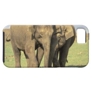India, Nagarhole National Park. Asian elephant iPhone 5 Case