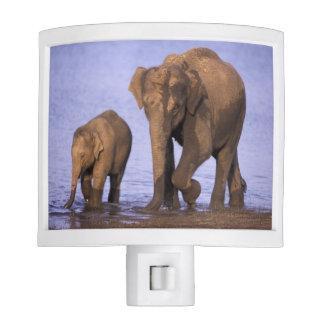 India, Nagarhole National Park. Asian elephant Night Lites