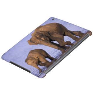 India, Nagarhole National Park. Asian elephant Cover For iPad Air