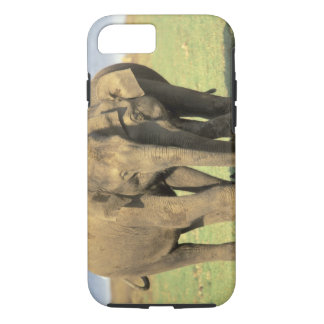 India, Nagarhole National Park. Asian elephant iPhone 8/7 Case