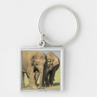India, Nagarhole National Park. Asian elephant Key Chain