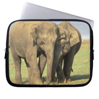 India, Nagarhole National Park. Asian elephant Computer Sleeves