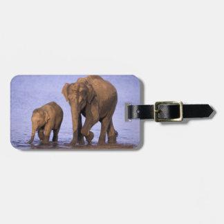 India, Nagarhole National Park. Asian elephant Bag Tag