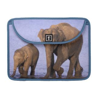 India, Nagarhole National Park. Asian elephant Sleeves For MacBook Pro