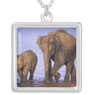 India, Nagarhole National Park. Asian elephant Pendant