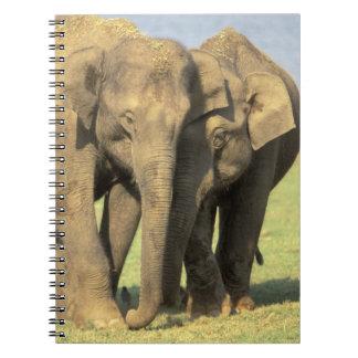 India, Nagarhole National Park. Asian elephant Spiral Notebook