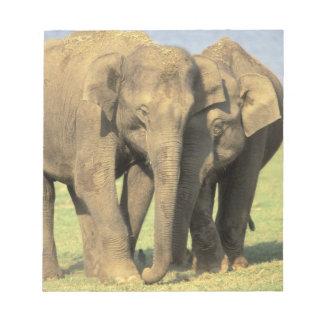 India, Nagarhole National Park. Asian elephant Memo Note Pads