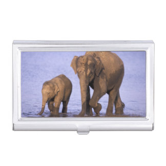 India, Nagarhole National Park. Asian elephant Business Card Case
