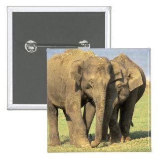 India, Nagarhole National Park. Asian elephant Pinback Button
