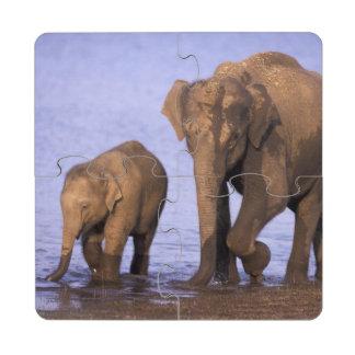 India, Nagarhole National Park. Asian elephant Puzzle Coaster