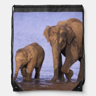 India, Nagarhole National Park. Asian elephant Backpack