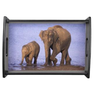 India, Nagarhole National Park. Asian elephant Serving Platters
