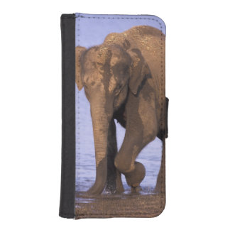 India, Nagarhole National Park. Asian elephant Phone Wallet Cases