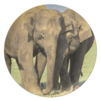 India, Nagarhole National Park. Asian elephant Dinner Plate