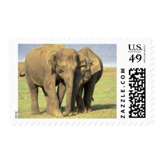 India, Nagarhole National Park. Asian elephant Postage