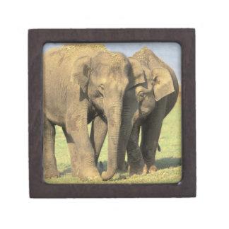 India, Nagarhole National Park. Asian elephant Premium Keepsake Box