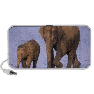 India, Nagarhole National Park. Asian elephant Notebook Speakers