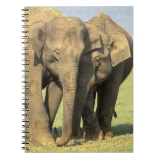 India, Nagarhole National Park. Asian elephant Spiral Notebook