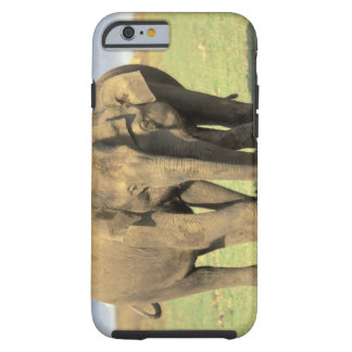 India, Nagarhole National Park. Asian elephant Tough iPhone 6 Case