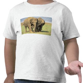 India, Nagarhole National Park. Asian elephant Shirt