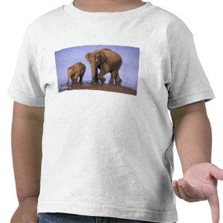 India, Nagarhole National Park. Asian elephant T Shirts