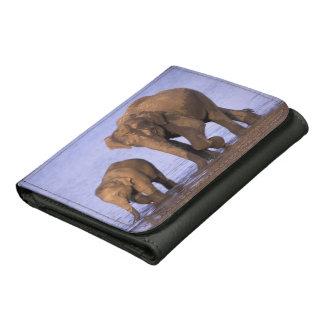 India, Nagarhole National Park. Asian elephant Wallet