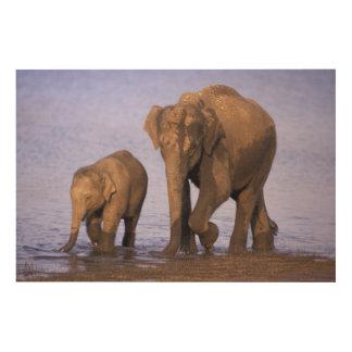 India, Nagarhole National Park. Asian elephant Wood Canvases