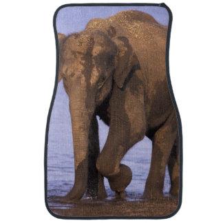 India, Nagarhole National Park. Asian elephant Floor Mat