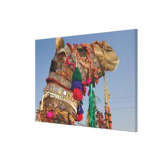 INDIA, Rajasthan, Pushkar: PUSHKAR CAMEL FAIR, Canvas Print