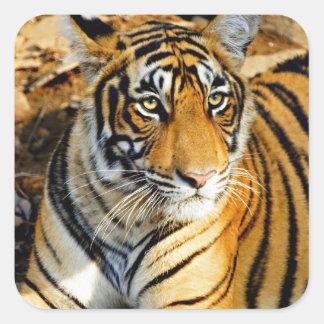 India, Sawai Madhopur, Ranthambore National Sticker