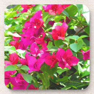 India travel flower bougainvillea floral emblem beverage coaster