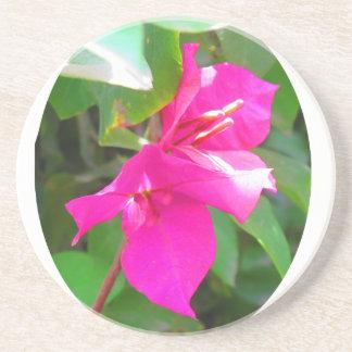 India travel flower bougainvillea floral emblem drink coaster