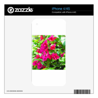 India travel flower bougainvillea floral emblem skins for iPhone 4S
