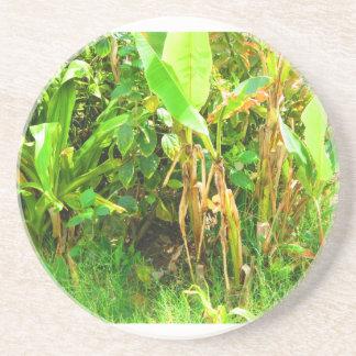 India Travels Infant Banana trees saplings Green Coaster