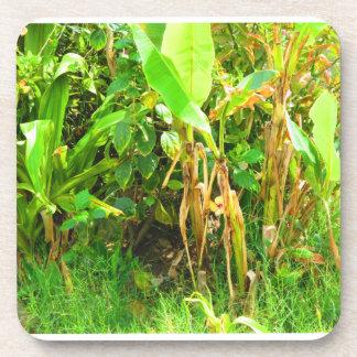 India Travels Infant Banana trees saplings Green Drink Coaster
