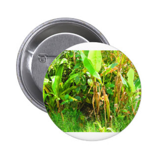 India Travels Infant Banana trees saplings Green Pinback Button