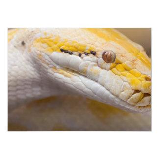 Indian Albino Python Ho Chi Minh City Zoo, Vietnam Card