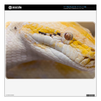 Indian Albino Python Ho Chi Minh City Zoo, Vietnam MacBook Air Decals