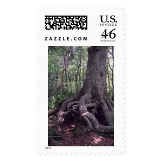 Indian Artifact Photograph Postage Stamp
