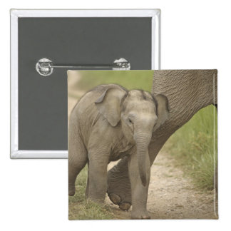 Indian / Asian Elephant and young one,Corbett 2 Button