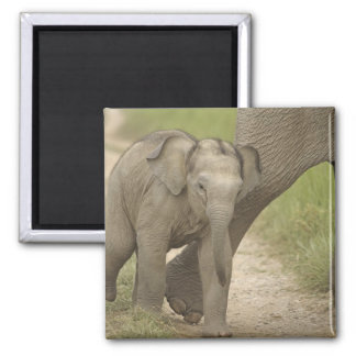 Indian / Asian Elephant and young one,Corbett 2 Magnet