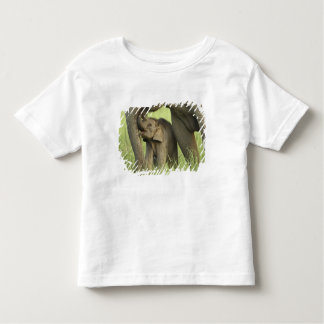 Indian / Asian Elephant and young one,Corbett 2 Toddler T-shirt