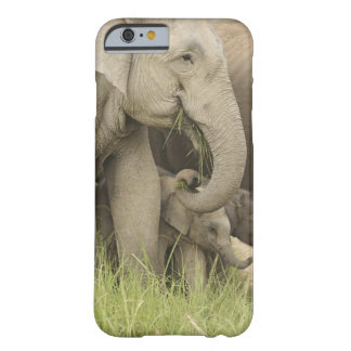Indian / Asian Elephant and young one,Corbett 3 Barely There iPhone 6 Case