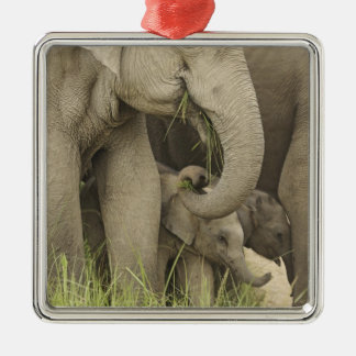 Indian / Asian Elephant and young one,Corbett 3 Metal Ornament