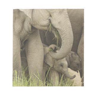Indian / Asian Elephant and young one,Corbett 3 Notepad