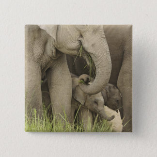 Indian / Asian Elephant and young one,Corbett 3 Pinback Button